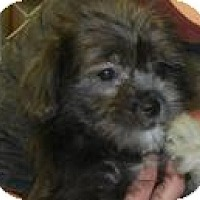 Adopt A Pet :: Chase - Antioch, IL