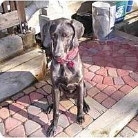 Adopt A Pet :: Kayle - Attica, NY