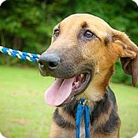 Adopt A Pet :: Samson - Sneads Ferry, NC