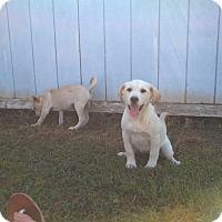 Adopt A Pet :: Coco - Jackson, TN