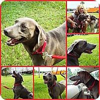 Adopt A Pet :: SARGE - Davenport, FL