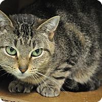 Adopt A Pet :: Dinah - Rockaway, NJ