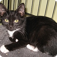 Adopt A Pet :: Deva - Colmar, PA