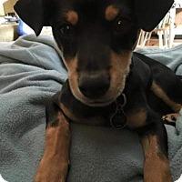 Adopt A Pet :: Bailey - Santa Rosa, CA