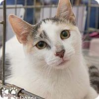 Adopt A Pet :: Donna - Merrifield, VA