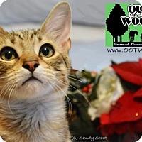 Adopt A Pet :: Mr. Scarlet/Foxy - Little Rock, AR
