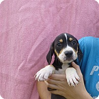 Adopt A Pet :: Ace - Oviedo, FL