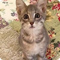 Adopt A Pet :: Heath - Gainesville, FL