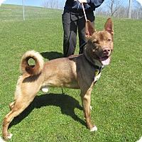 Adopt A Pet :: Tonto - Lake Odessa, MI
