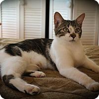 Adopt A Pet :: Hughie - Hamilton, ON