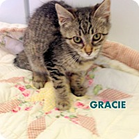 Adopt A Pet :: Gracie - Mountain View, AR