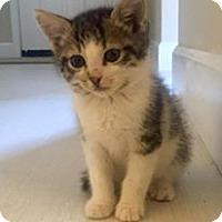 Adopt A Pet :: Dylan - Gainesville, FL
