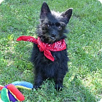 Adopt A Pet :: Swiper - Mocksville, NC