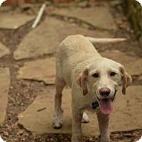 Adopt A Pet :: Natalie - San Antonio, TX