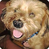 Adopt A Pet :: Calbert - Coldwater, MI