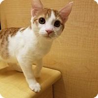 Adopt A Pet :: Juno - Surprise, AZ