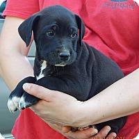 Adopt A Pet :: Keno (7 lb) Video! - SUSSEX, NJ