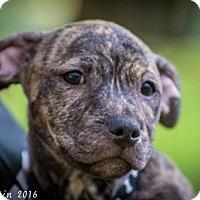 Adopt A Pet :: Jason - Bradenton, FL