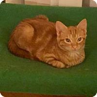 Adopt A Pet :: Pinecone - Bulverde, TX