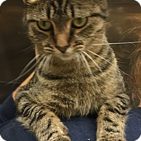 Adopt A Pet :: TRACIE - Hibbing, MN