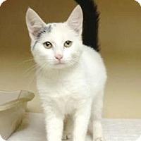 Adopt A Pet :: Sugar  $20 - Lincolnton, NC