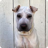 Adopt A Pet :: Ernestine - Los Angeles, CA