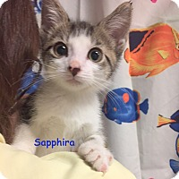 Adopt A Pet :: SAPPHIRA - Cliffside Park, NJ