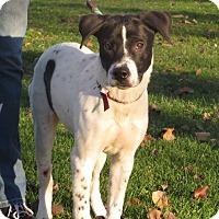 Adopt A Pet :: Sadie - Cokato, MN