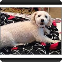 Adopt A Pet :: Marco - GA - Tulsa, OK