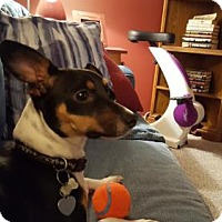 Adopt A Pet :: Toby # 1221 - Arlington Heights, IL