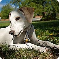 Adopt A Pet :: Peppermint - Richmond, VA