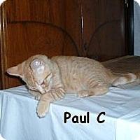 Adopt A Pet :: Paul C - Sacramento, CA