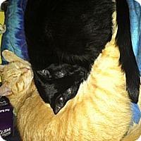 Adopt A Pet :: COCO&CYRUS - Clay, NY