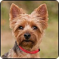 Adopt A Pet :: Rowdy - Westfield, NY