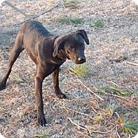 Adopt A Pet :: Mulan - Rome, NY