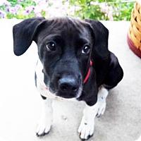 Adopt A Pet :: Gabby - Xenia, OH