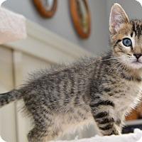 Adopt A Pet :: Jinga - Davis, CA