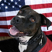 Adopt A Pet :: Biggie Smalls - La Habra, CA