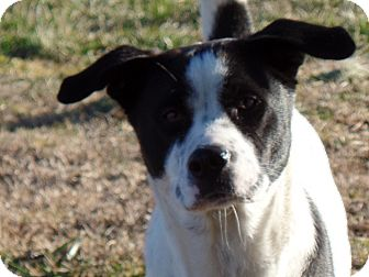 Pointer Mix Dog for adoption in Woodlawn, Tennessee - Maddie