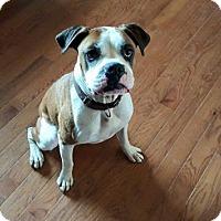 Adopt A Pet :: Hank - Springfield, MO
