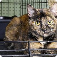 Adopt A Pet :: Terri - Marlinton, WV