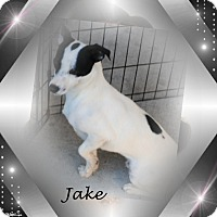 Adopt A Pet :: Jake - Crowley, LA