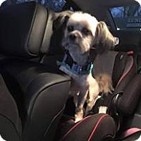 Adopt A Pet :: Halo - Ogden, UT