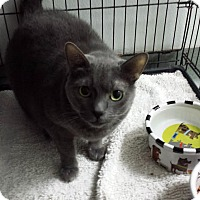 Adopt A Pet :: Misty - Westminster, CA