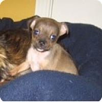 Adopt A Pet :: Daisy - Rockaway, NJ