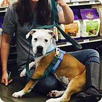 Adopt A Pet :: Milo - Richmond, CA