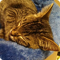 Adopt A Pet :: Cypress - Scottsdale, AZ