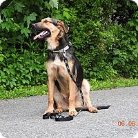Adopt A Pet :: Zack - New Oxford, PA