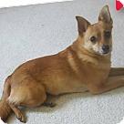 Adopt A Pet :: Kalea