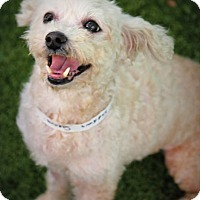 Adopt A Pet :: Sabrina - Ft. Lauderdale, FL